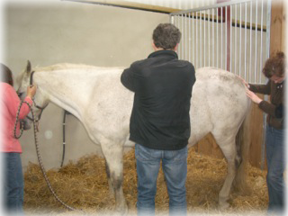 Equine Treatment